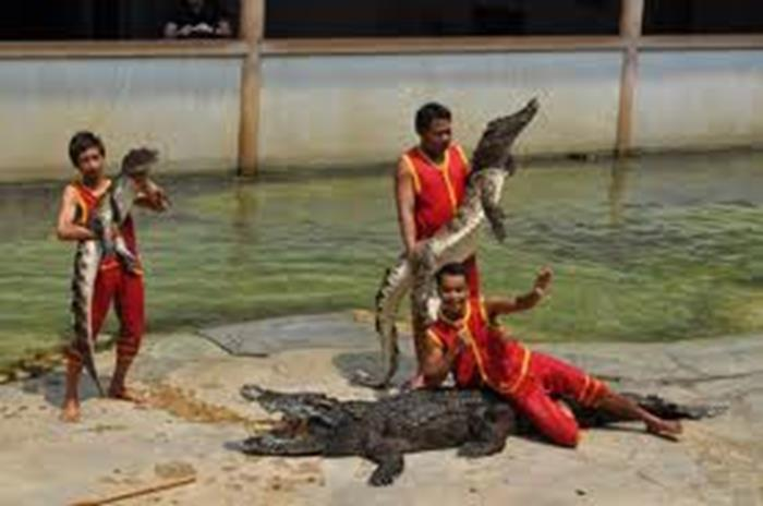 Ancient City & Crocodile Farm